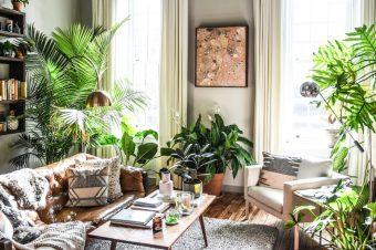 3 dekorativne i veoma korisne sobne biljke