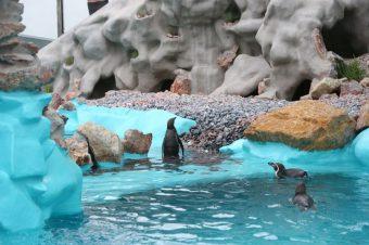 Novi pingvinarijum u Beogradu