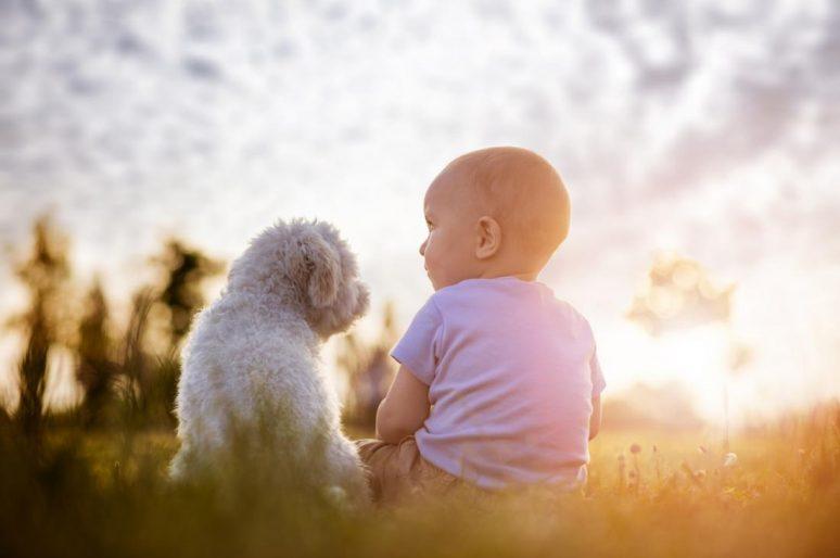 Beba i kućni ljubimac