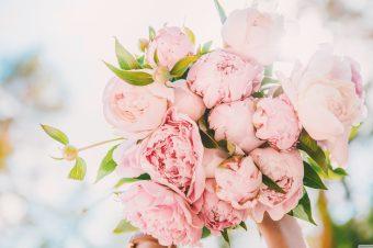 Božur – raskošni majski cvet