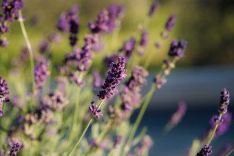 Prirodni načini da oterate insekte iz doma