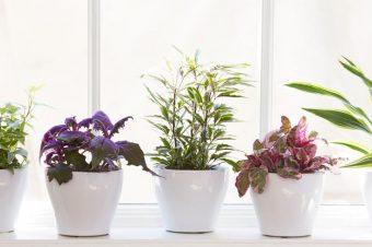 Prolećne biljke koje ćete poželeti na svom balkonu