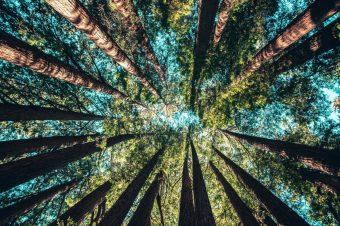 Da li znate šta je šumska kupka?